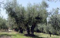 azienda_agricola_persiani580f